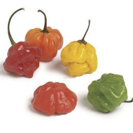 Picture of Scotch Bonnet Pepper (1/2 lb)