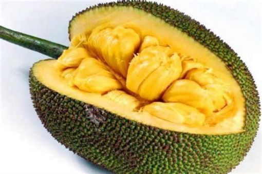 Picture of Jackfruit (1lb/407g)
