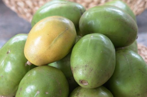Picture of June Plum (1 dozen)