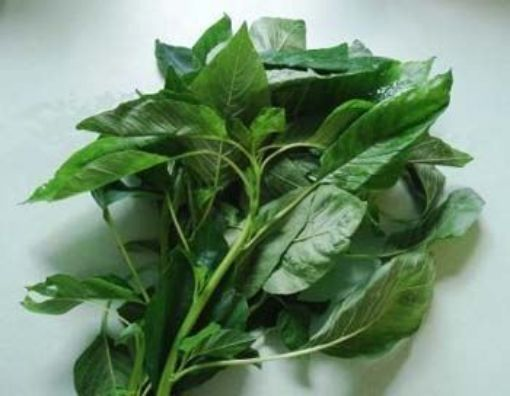 Picture of Callaloo - Local (1 Bunch - Small Bunch - Estimated 510 g/1.12 lbs)