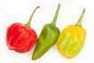 Scotch _bonnet_peppers