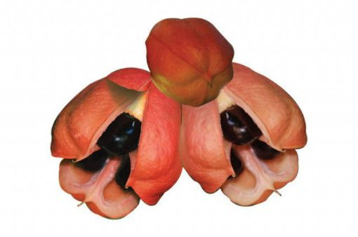 Picture of Ackee (1 doz)