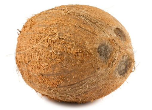 Picture of Dry Coconut (Green) - 3 Coconuts